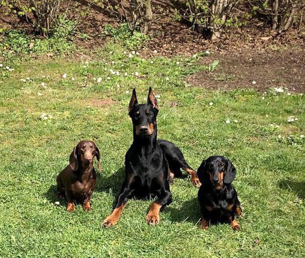 Amari mit seinen neuen Freunden