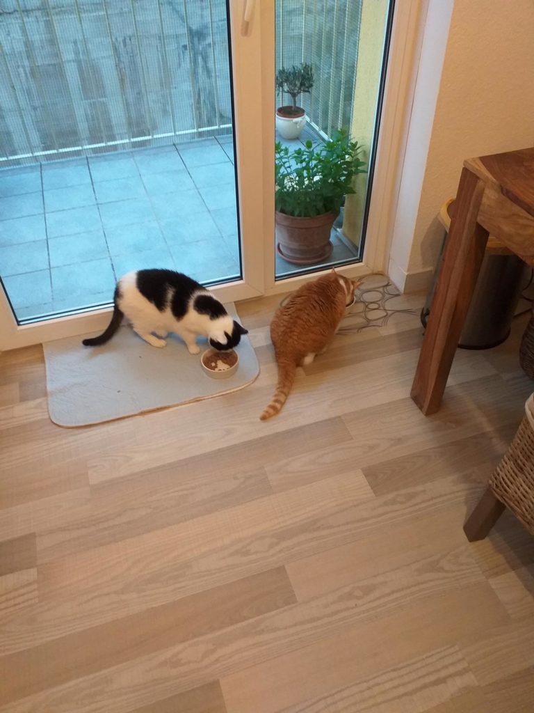 Mimi und Tinka 1