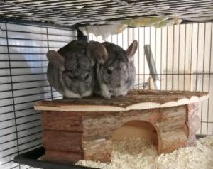 Grey und Leo